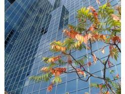 Осень фотографии онлайн 7