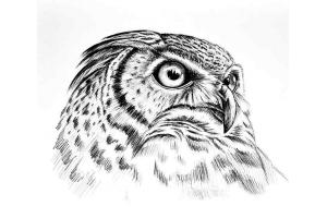 Птицы рисунки карандашом 2