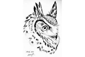Птицы рисунки карандашом 3