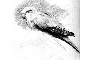 Птицы рисунки карандашом 4