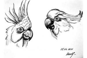Птицы рисунки карандашом 5