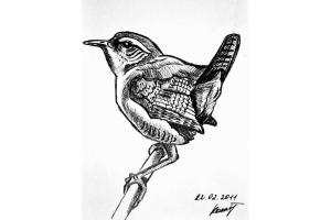 Птицы рисунки карандашом 6