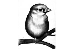 Птицы рисунки карандашом 7