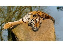 Картинки животные нашей планеты