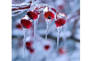 Снег и лед в природе фото