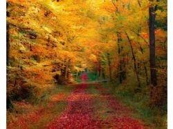 Осень фото 1366х768