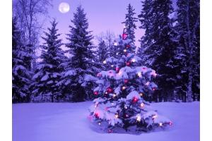 Новогодний лес картинки 1