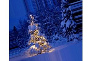 Новогодний лес картинки 6