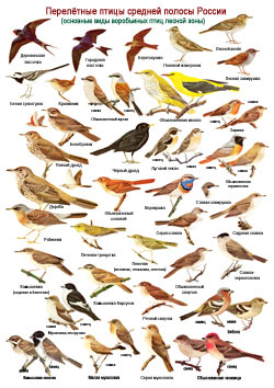как узнать породу птицы по фотографии ресторане