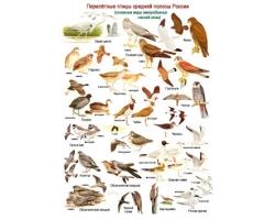 Перелетные птицы фото 2