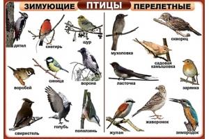 Перелетные птицы фото 3