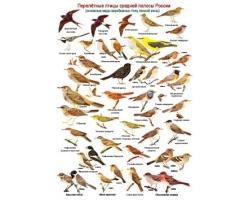 Перелетные птицы фото 4