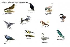 Перелетные птицы фото 5
