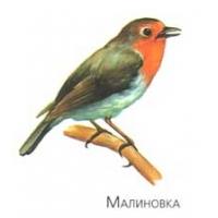 Перелетные птицы фото 6