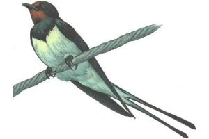 Перелетные птицы фото 7