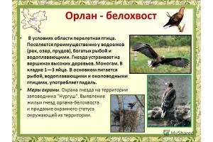 Перелетные птицы фото 8
