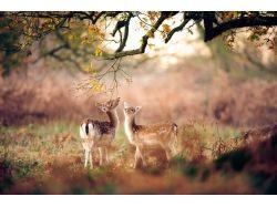 Фото осень животные 7