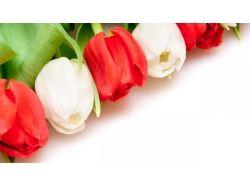 Широкоформатные фотографии цветов 7