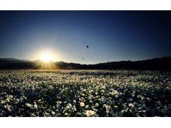 Фото цветы восход