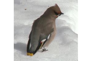 Фото птицы подмосковья