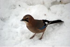 Фото птицы подмосковья 3