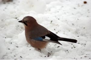 Фото птицы подмосковья 5