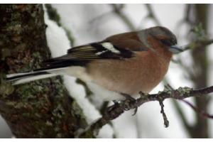 Фото птицы подмосковья 7