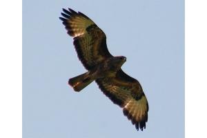 Фото птицы подмосковья 8