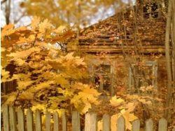 Фото осень в деревне 7