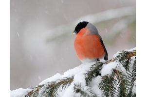Фото птицы украины 3