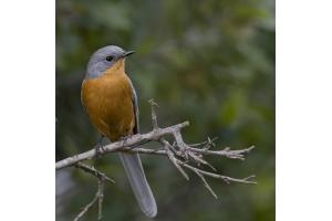 Фото птицы украины 4