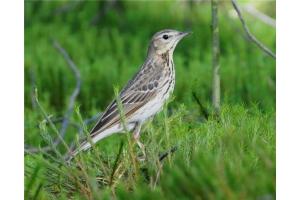 Фото птицы украины 5