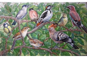 Фото птицы украины 6