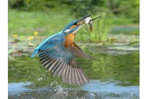 Фото птицы украины 7
