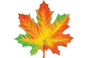Рисунок кленовый лист 6