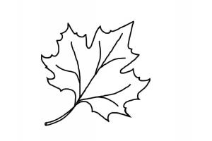 Рисунок кленовый лист 7