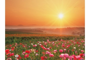 Картинки восход солнца 3