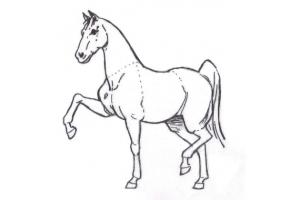 Рисунок на свободную тему 5