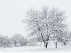 Фото зима в вологде скачать
