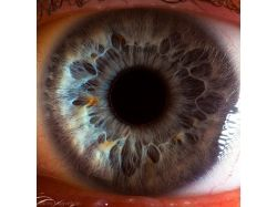 Макрофотографии глаз