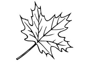 Кленовый лист шаблон 5