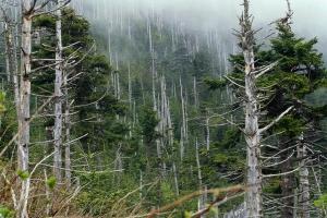 Фото кислотные дожди 3