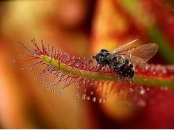 Хищные насекомые фото 7