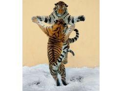 Животные танцуют фото