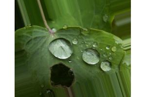 Кислотные дожди фото 7
