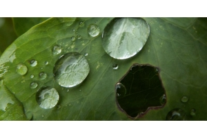 Кислотные дожди фото 8