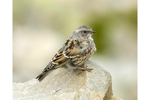 Фото птицы беларуси 2