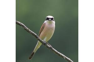 Фото птицы беларуси 4