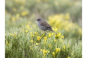 Фото птицы беларуси 5