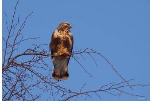 Фото птицы беларуси 6